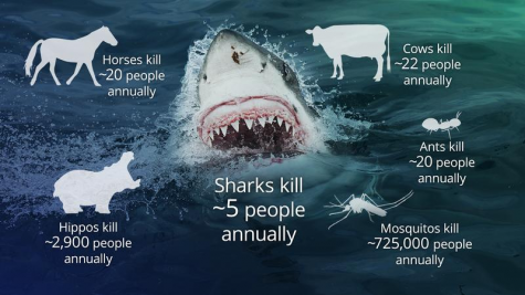 A Shark's Deadly Reality