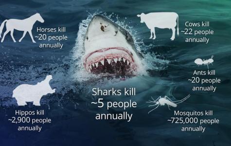 A Shark's Deadly Reality