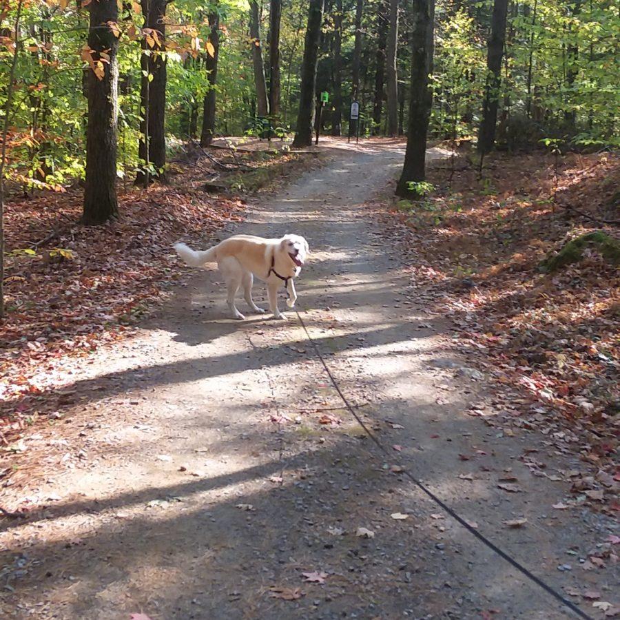 Dog-walking at Dunn Park