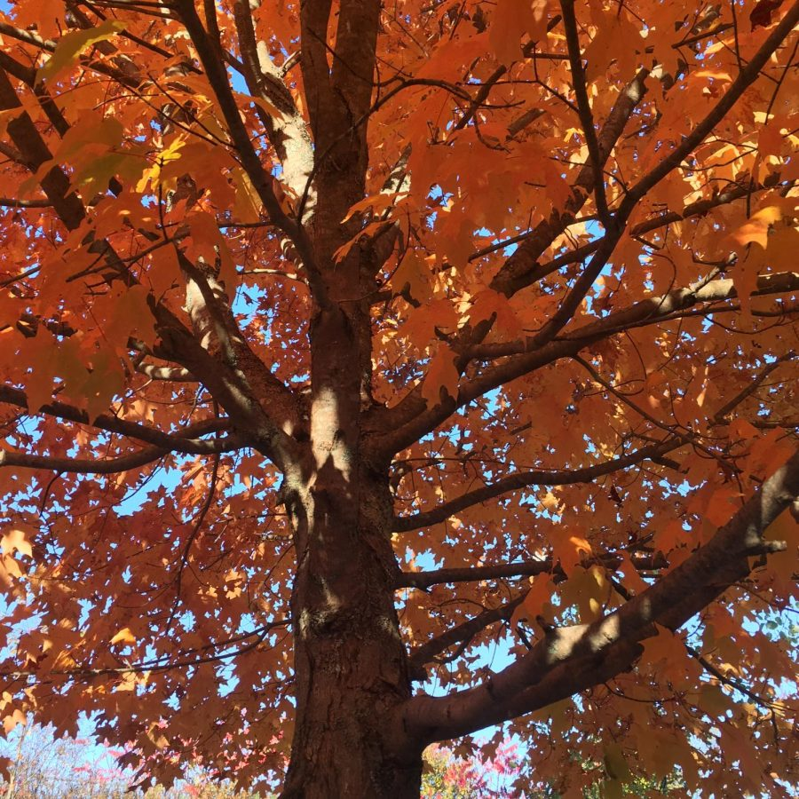 Last few weeks of autumn