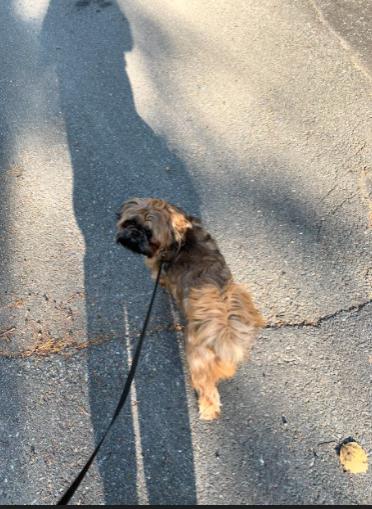 Emma Sherman walking her dog