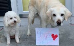 Dogs Cleo and Cando giving their support to