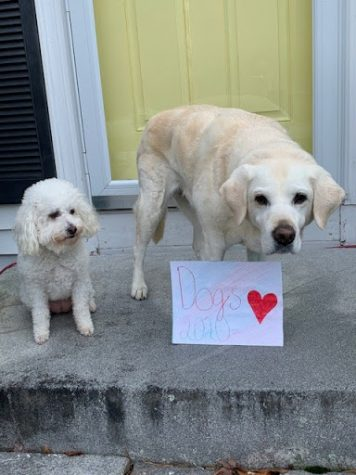 "Dogs Cleo and Cando giving their support to ""Dogs 2020."""